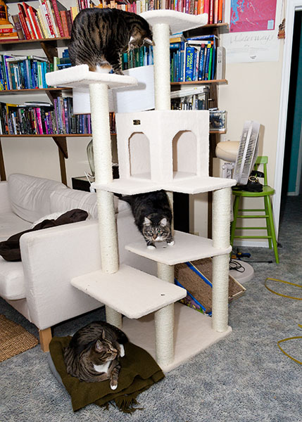 Thomas, Oliver and Henry on new tower