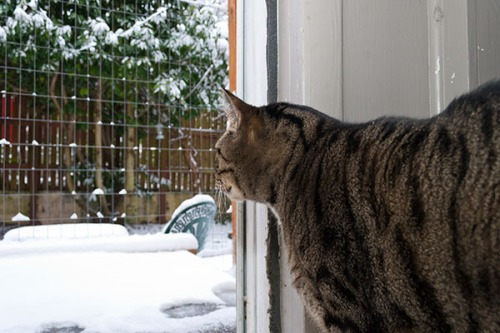 Oliver looking at snow