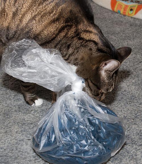Oliver sniffing scarf