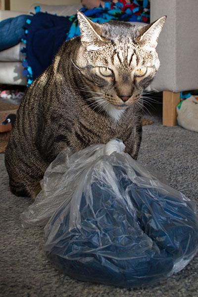 Oliver sniffing scarf 2