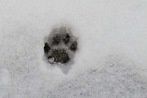 Oliver's footprint