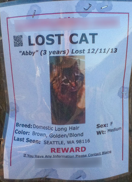 Lost Cat Poster- Abby