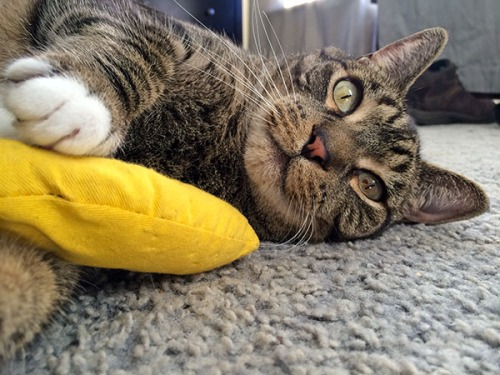 Oliver with banana 1