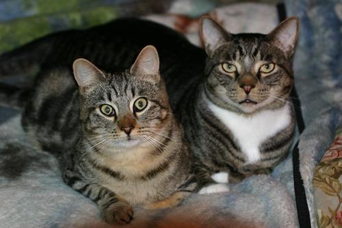Otis and Henry 2006