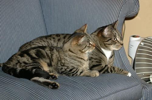Otis and Oliver 2006