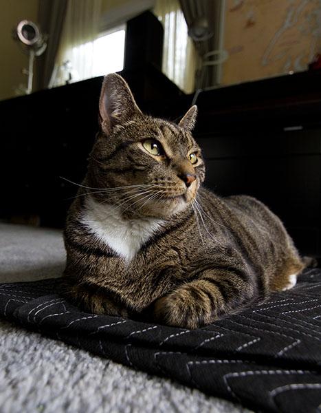 Oliver thinking