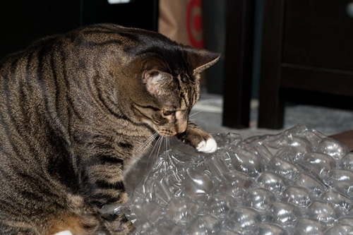 Oliver with bubblewrap 1