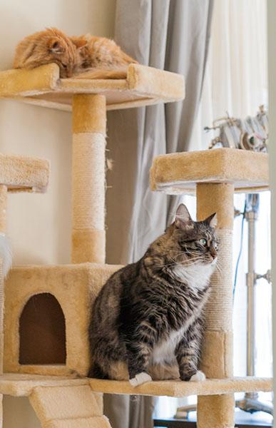 Thomas, Mama Cat