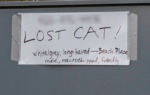 Lost Cat Poster- handwritten no photo
