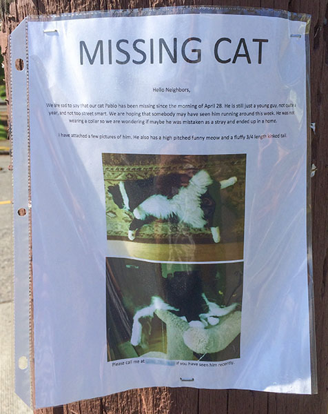 Missing Cat Poster- Pablo