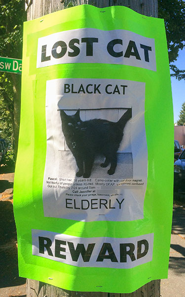 Lost Cat Poster- Pascal