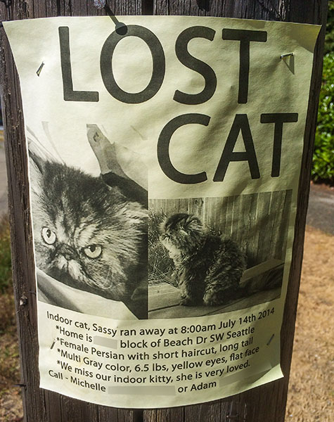 Lost Cat Poster- Sassy