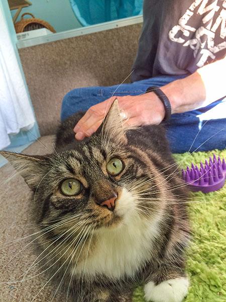 Thomas pondering hairball