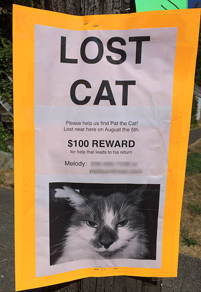 Lost Cat Poster- Pat the Cat