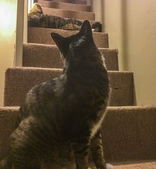 Oliver and Henry on stairs 1