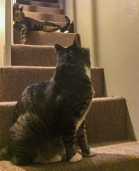 Oliver and Henry on stairs 2