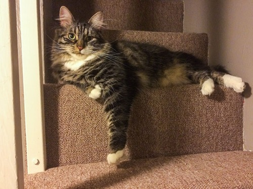 Thomas on stairs