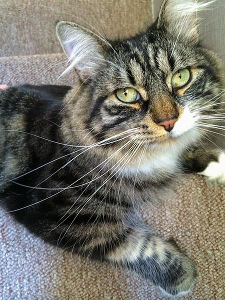 Thomas on stairs
