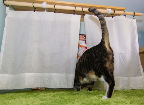 Henry peeks behind the curtain