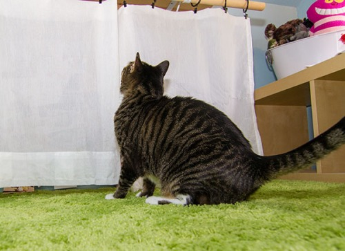 Henry inspecting curtains
