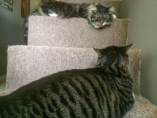 Henry, Thomas on stairs