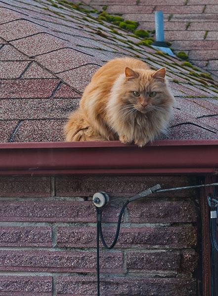 02-Mama_Cat_on roof