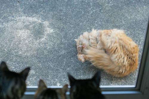03- Mama Cat, Seattle, WA 032611 (31)