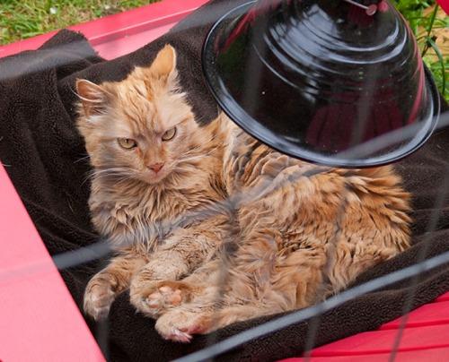 11 Mama cat resting 042813-2