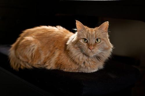 18 Beautiful Mama Cat