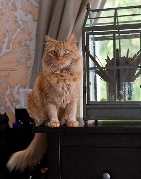 Mama Cat, 092213-53
