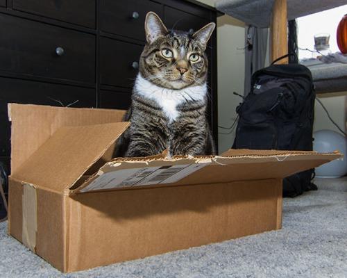 Henry in box 1