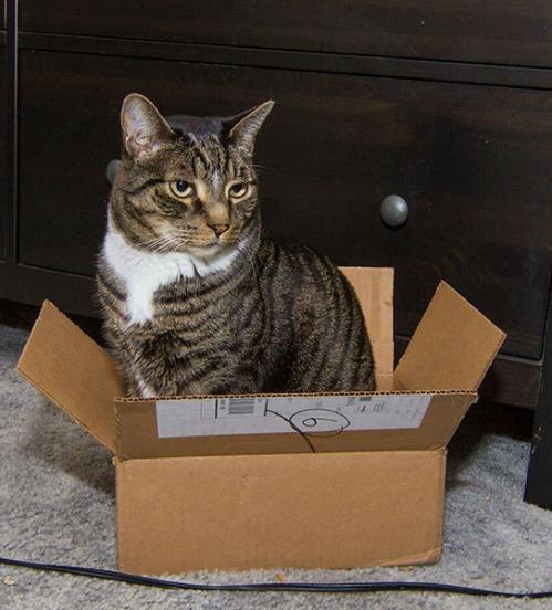 Henry in box 2