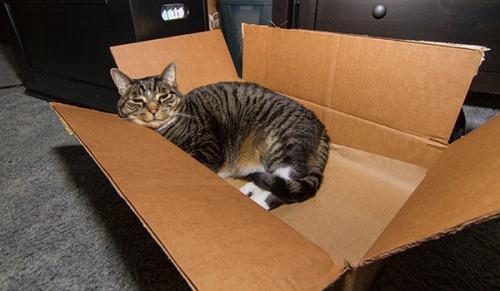 Henry in box 3