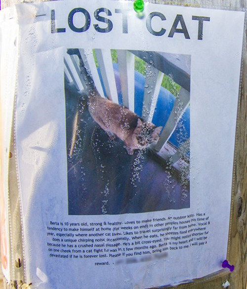 Lost Cat Poster- Berta