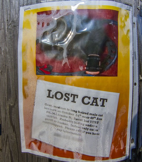 Lost Cat Poster- gray male indoor