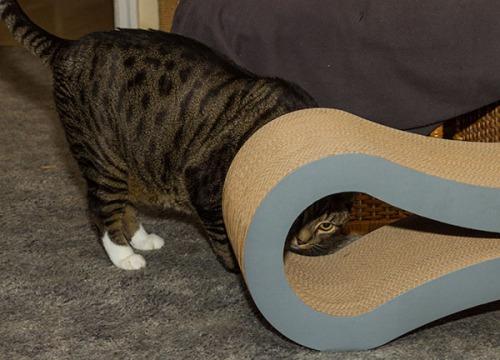 Catsmas gift 2