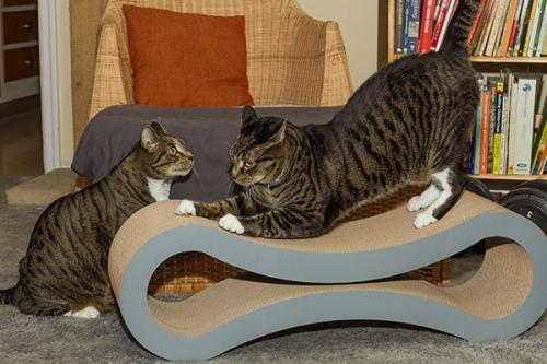 Catsmas gift 3