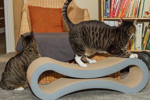 Catsmas gift 4