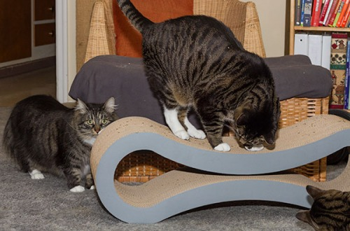 Catsmas gift 5