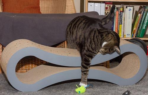 Catsmas gift 6