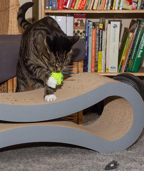 Catsmas gift 7