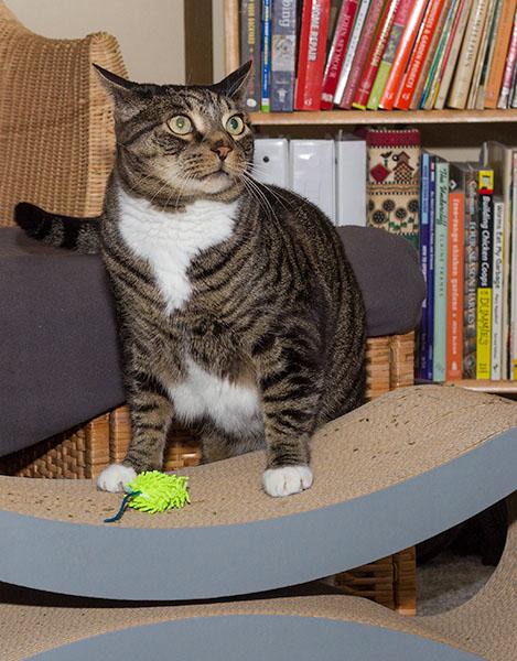Catsmas gift 8