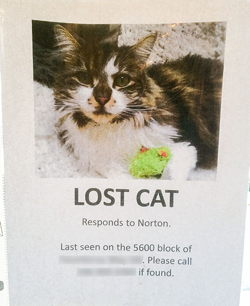 Lost Cat Poster- Norton