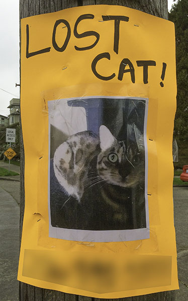Lost Cat Poster-1