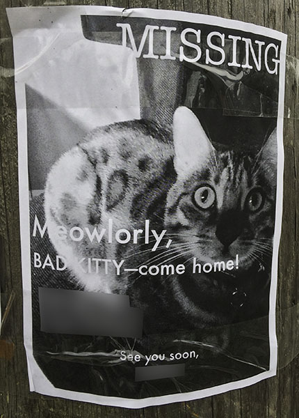 Lost Cat Poster 3