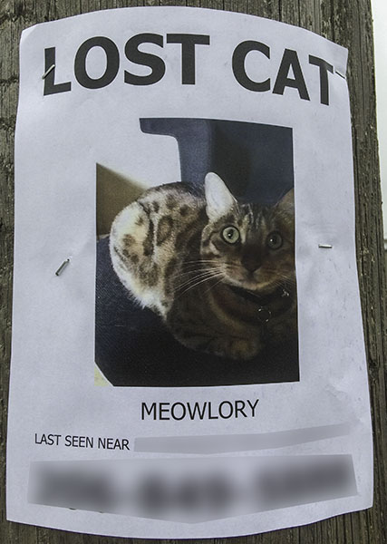 Lost Cat Poster 4