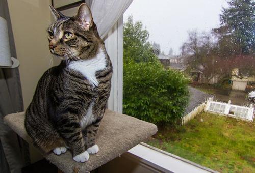 Rainy Day Henry 2