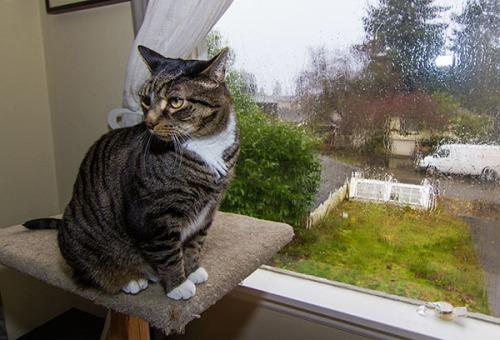Rainy Day Henry 3