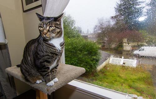 Rainy Day Henry 6