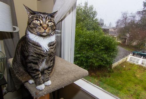 Rainy Day Henry 7